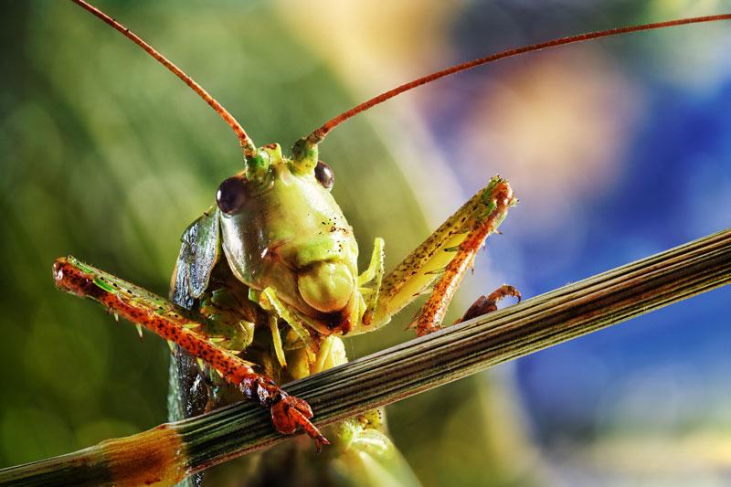 Locusts & Wild Honey