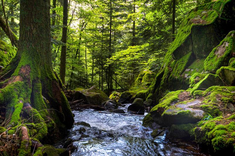 Trees & Streams