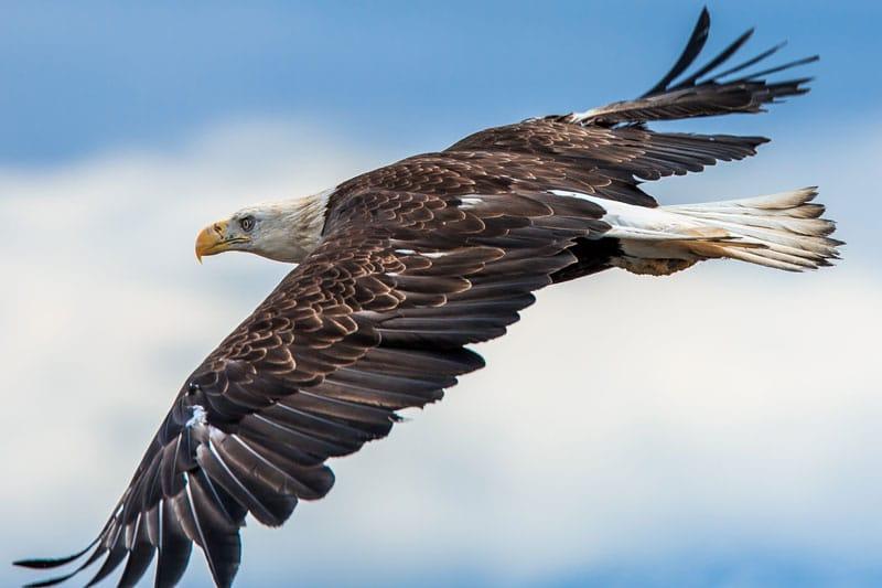 Fly Like An Eagle